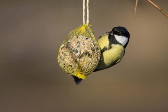 Как сделать оригинальную кормушку для птиц своими руками из дерева: чертежи, размеры