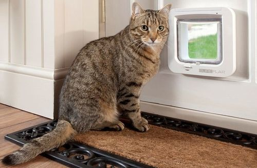 Как сделать дверь для кошки в двери своими руками?