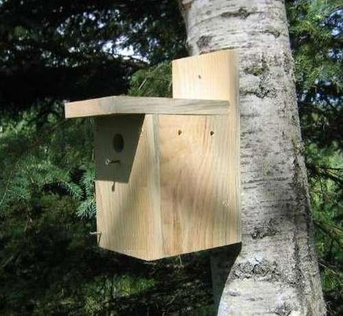 Как сделать скворечник из дерева своими руками: чертежи, размеры, виды