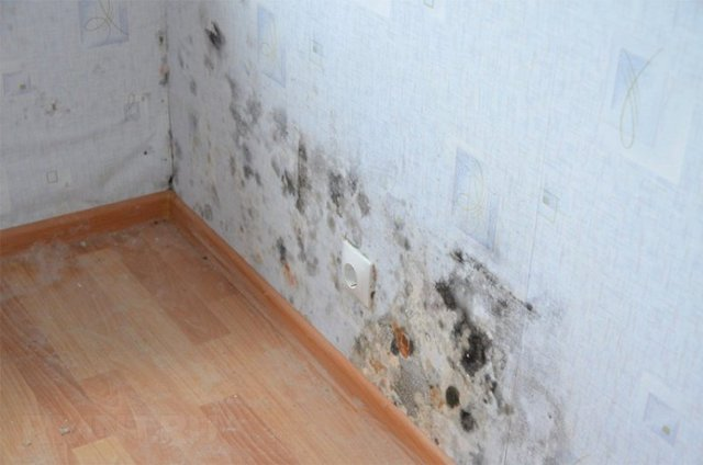 Как избавиться от грибка на стенах в квартире: чем убить, средства против плесени